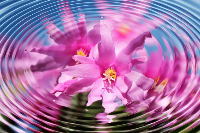 flower-110783_640