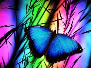 butterfly-370729_640