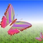 Was hat ein Schmetterling mit deiner Hülle zu tun?