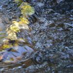 Im Fluss sein und trotzdem gehalten werden auf unserem SeelenWeg