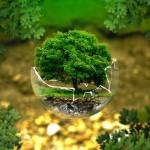 Wie uns die Natur auf unserem Seelenweg begleitet