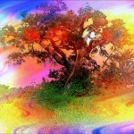 Was ein Baum dir über dein Leben erzählt