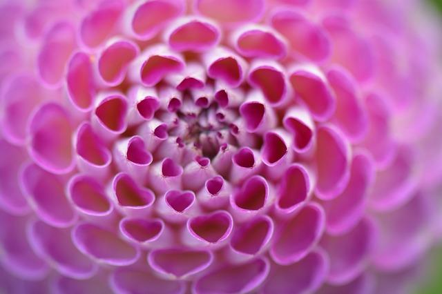 flower-1539311_640